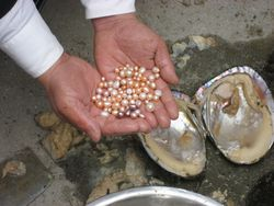 Dave Bing showing pearls from Chinese freshwater mussel, pg. 111